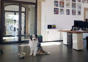 Fellow ist bereit seine Digitalcommunity willkommen zu heißen | hallo.digital GmbH Karlsruhe